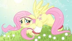 Free Hentai Western Gallery: My Little Pony - Fluttershy